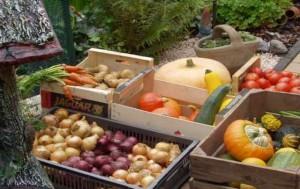 Eerlijke eigen groente kan niet op tegen groente uit de winkel