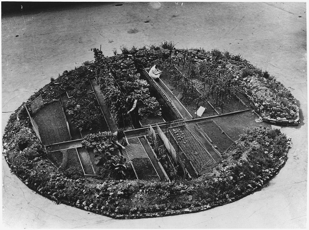 Groentetuin in een bomkrater mdden in Londen tijdens de 2e wereldoorlog