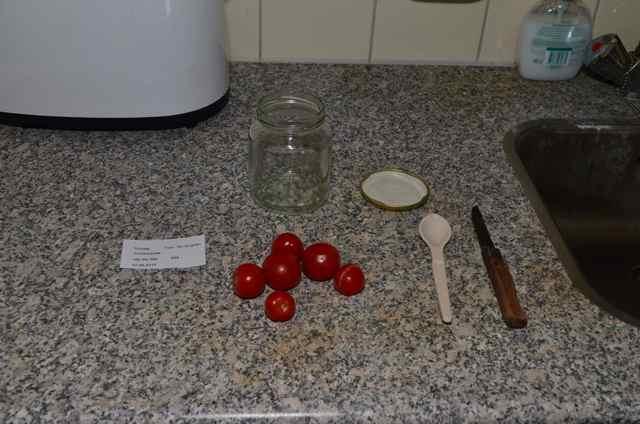 Tomatenzaad oogsten  (1k)