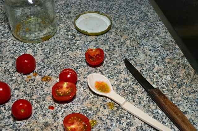 Tomatenzaad oogsten  (3k)